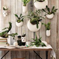 Кашпо с комнатными растениями на деревянной стене