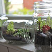 Живые растения в стеклянных банках