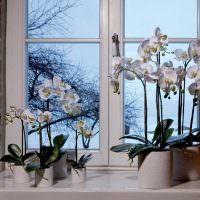 Подоконник в частном доме с комнатными растениями