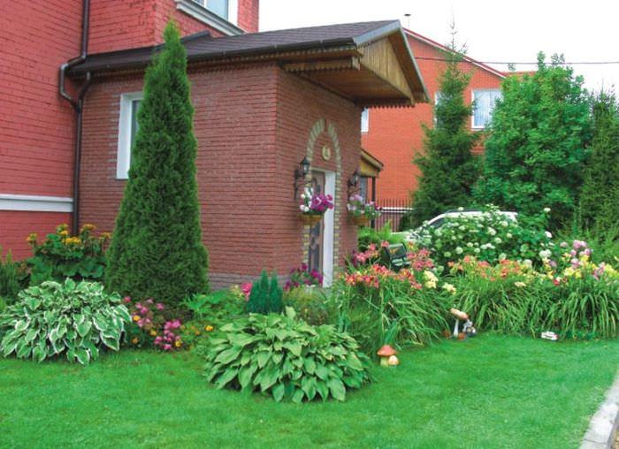 Зеленый газон с хостами перед кирпичным домом