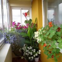 Комнатные цветы на балконе пятиэтажного дома