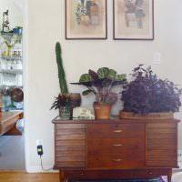 Комнатные растения на старом комоде
