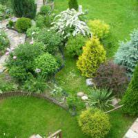 Группа кустарников смешанного типа различной формы и размеров