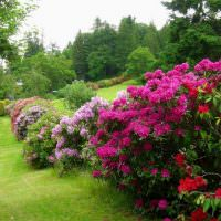 Цветущие кустарники на склоне загородного участка