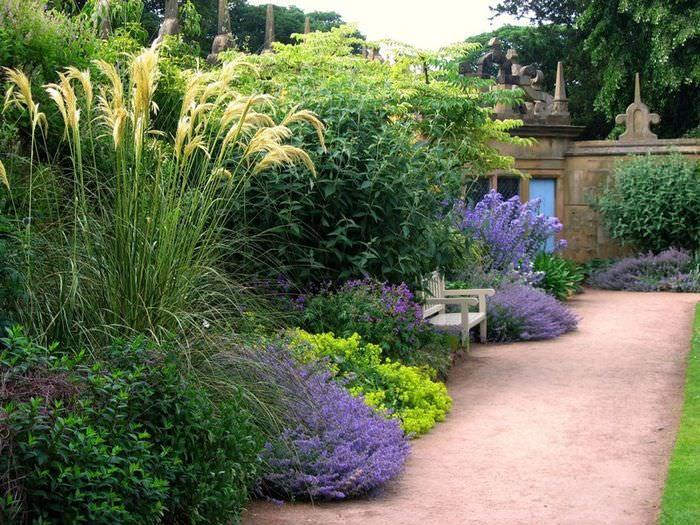 Растения с сиреневыми цветками в ландшафте сада