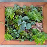 Объемная картина из живых растений