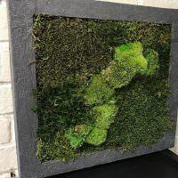 Объемная картина из зеленого мха