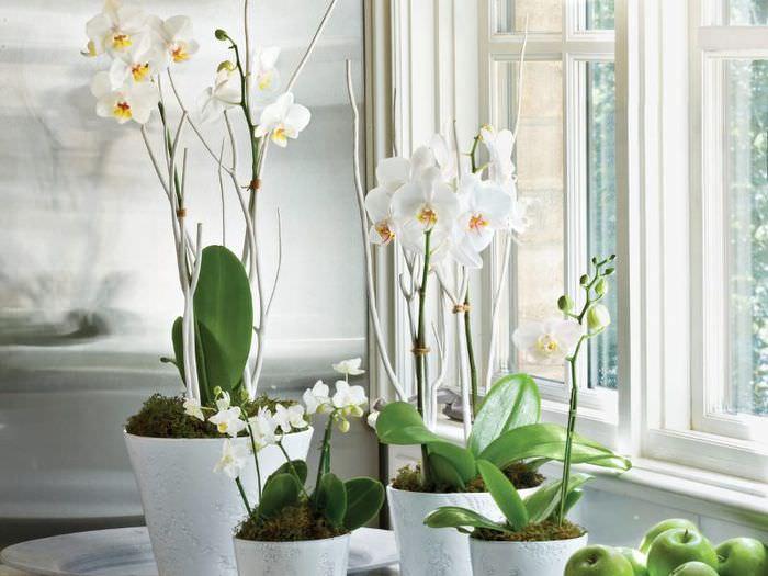 Белые орхидеи на подоконнике квартиры