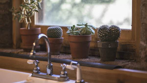 Не совсем понятно, чем настолько привлекательно это колючее растение, но это частый гость в доме, в частности на солнечной кухне.