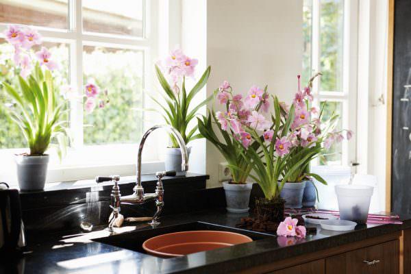 Комнатные растения украсят интерьер любого помещения. Очень здорово они смотря и в интерьере кухни