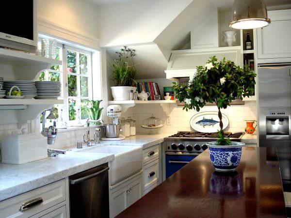 Выбирая цветы для кухни, следует учитывать, что далеко не многие из них стойки к постоянным температурным перепадам, задымленности и обильному парообразованию.