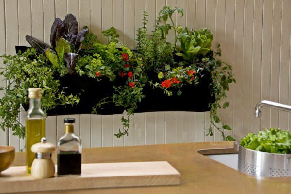 Выбирая растения на кухню, учитывайте их особенности