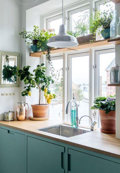 Перед покупкой растений, задумайтесь, сможете ли вы расположить их, учитывая их особенности
