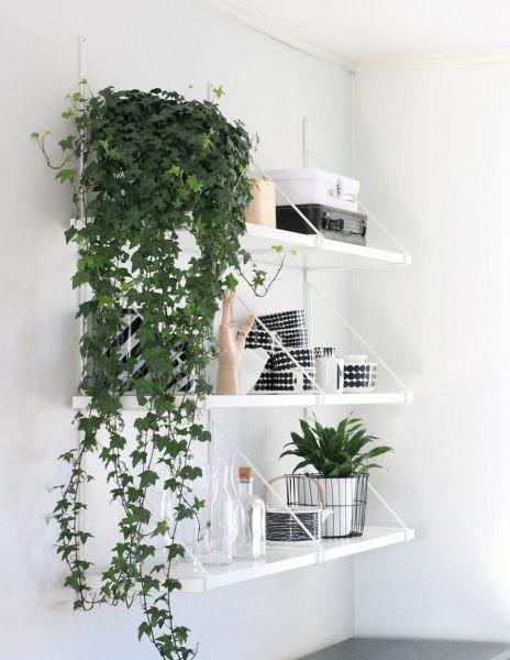 Необычно и интересно смотрятся на кухне вьющиеся растения