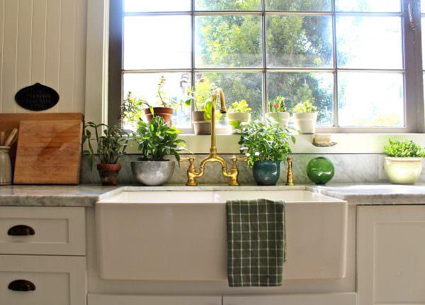 На окнах, которые выходят на юг, лучше располагать неприхотливые растения